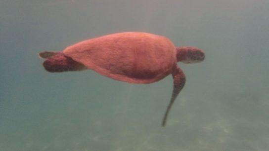 Turquoise Bay, Cape Range National Park, Australie-Occidentale