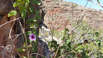 Mandu Mandu Creek, Cape Range National Park, Australie-Occidentale