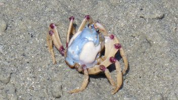 Crab-P1040042