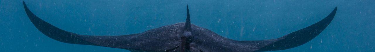 Manta-Ray-Coral-Bay-WA_DSC3599