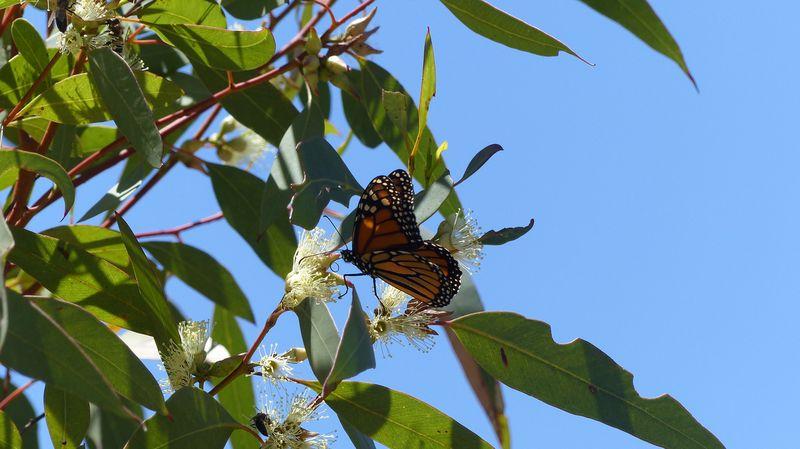 Yalgorup National Park, Preston Beach, Australie-Occidentale