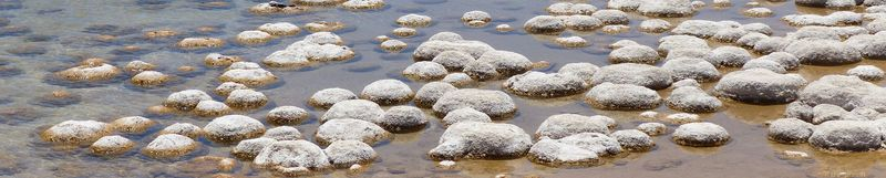 Lake Clifton Thrombolites, Lake Clifton, Australie-Occidentale