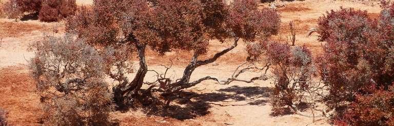 Francois Peron National Park Australie-Occidentale