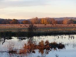 Jerrabomberra Wetland ACT