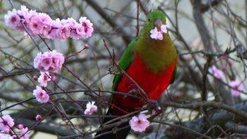 photo-gallery-birds