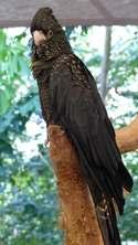 Wildlife Habitat, Port Douglas, Queensland