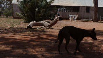 Hermannsburg, Northern Territory