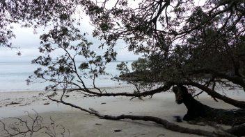 booderee-jervis-bay-Kittys-Beach