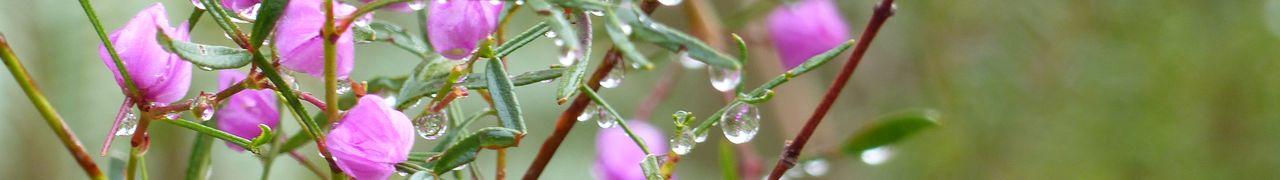 Les fleurs du Booderee National Park.