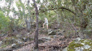 NSW-Morton-National-Park-Fairy-Bower-Falls-Walk
