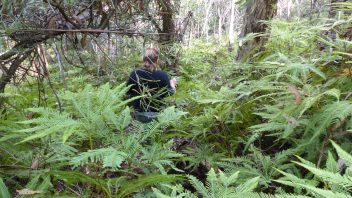 NSW-Morton-National-Park-Fern-Glen-Walk
