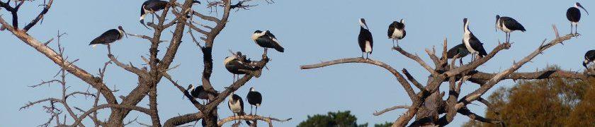 Jerrabomberra Wetlands