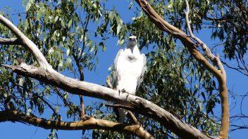 Arthur River Tasmanie