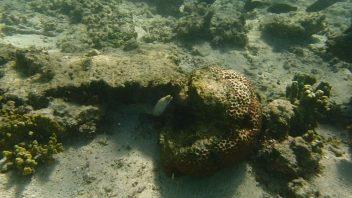 Oyster Stacks Snorkelling Area, Cape Range National Park, Australie-Occidentale