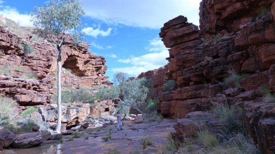 John Hayes Rockhole, Hart, NT