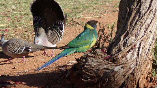 Alice Springs, Northern Territory