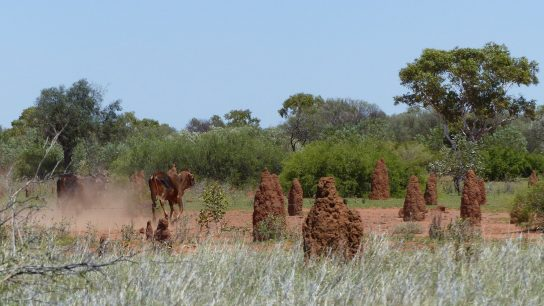 Tennant Creek, Northern Territory
