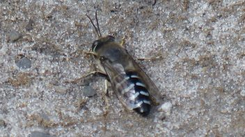 booderee-jervis-bay-insect-bug