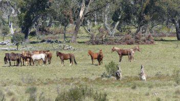 kosciuszko-national-park-nsw-blue-waterholes-trail