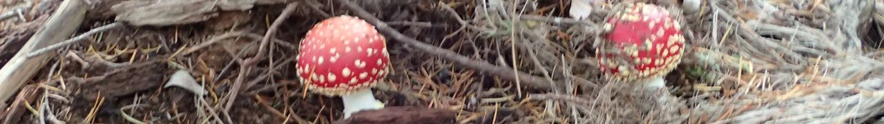 Les champignons d'automne